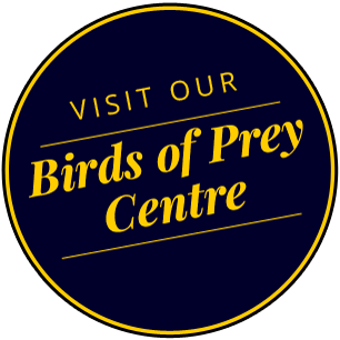 Birds of Prey centre